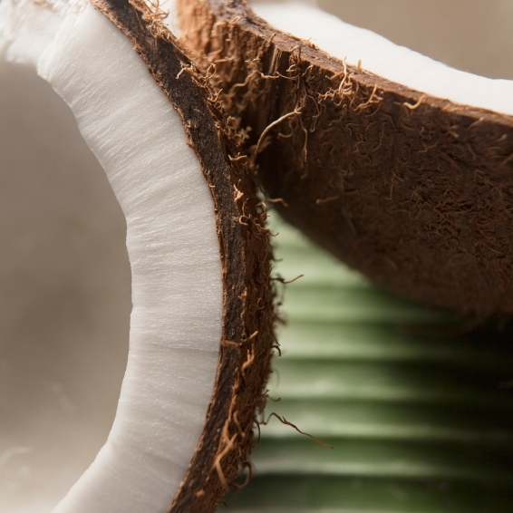 Coconut, a Top SuperFood
